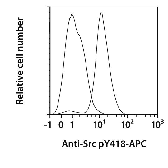 Src pY418 Antibody, anti-human, REAfinity™