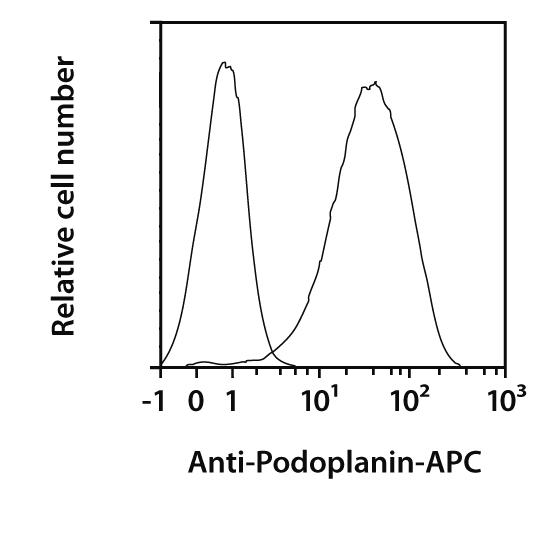 Podoplanin Antibody, anti-human, REAfinity™