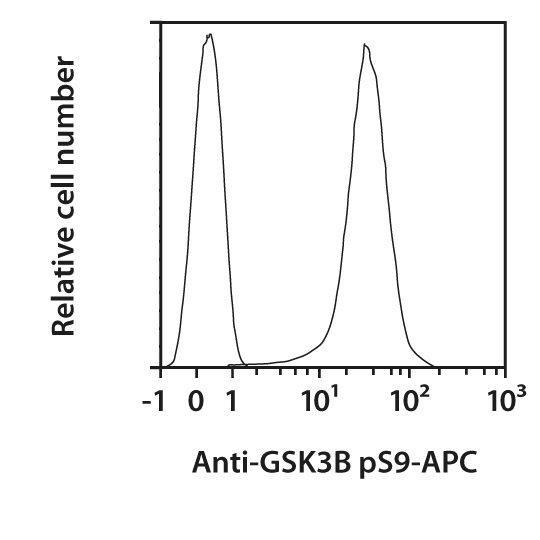 GSK3B pS9 Antibody, anti-human/mouse/rat, REAfinity™