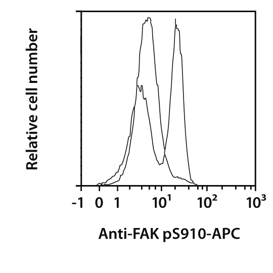 FAK pS910 Antibody, anti-human, REAfinity™