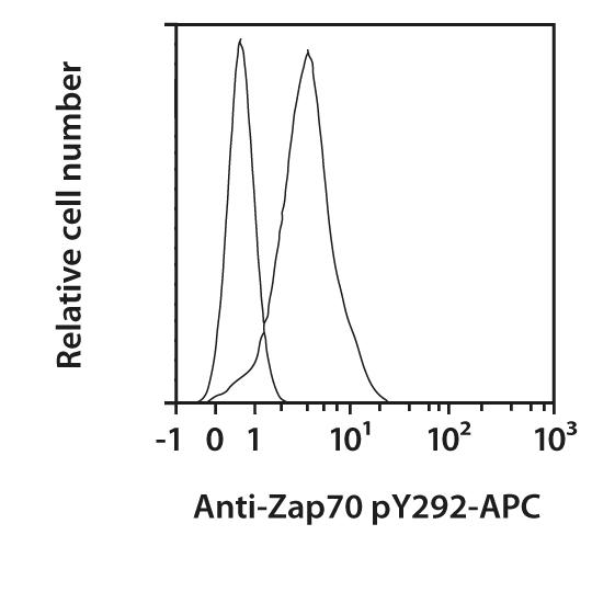 ZAP70 pY292 Antibody, anti-human, REAfinity™
