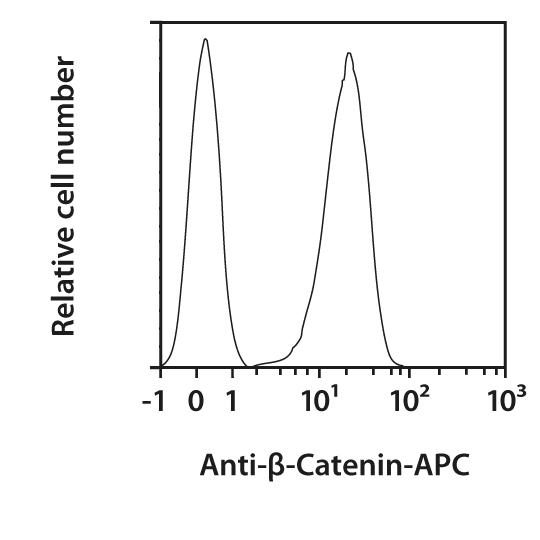 β-Catenin Antibody, anti-human/mouse, REAfinity™