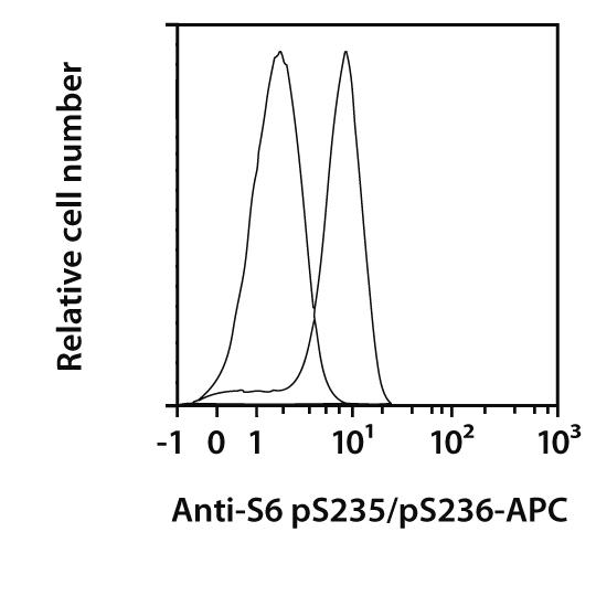 S6 pS235/pS236 Antibody, anti-human, REAfinity™