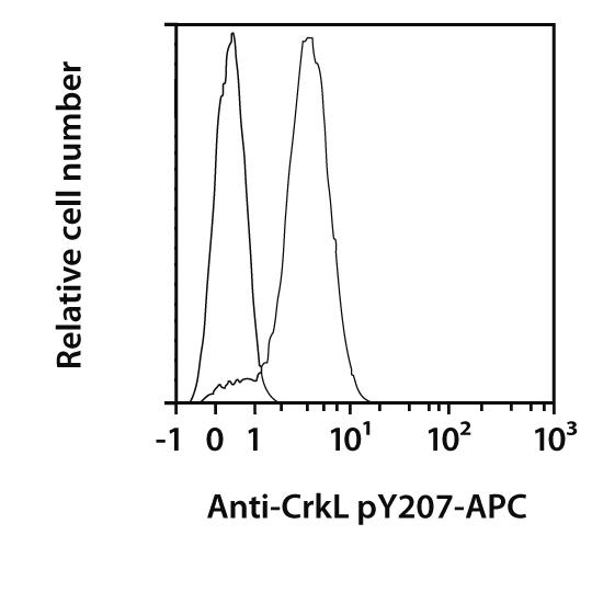 CrkL pY207 Antibody, anti-human, REAfinity™