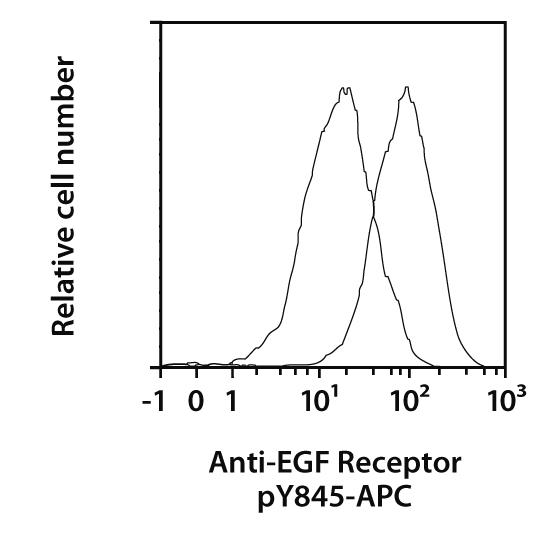 EGF Receptor pY845 Antibody, anti-human, REAfinity™