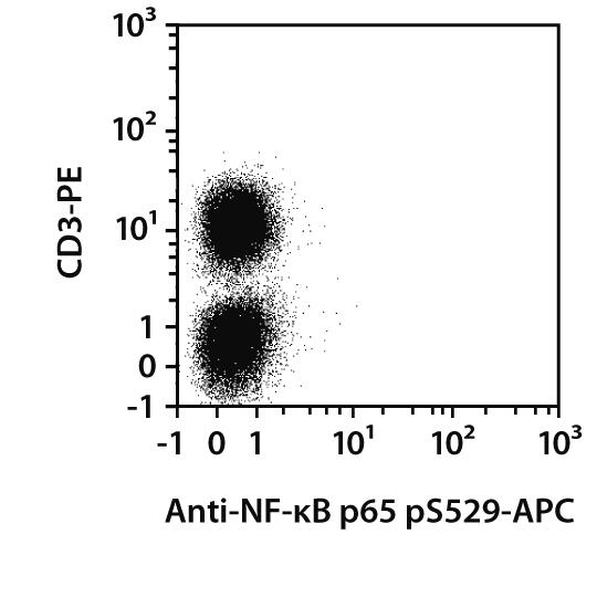 NF-κB p65 pS529 Antibody, anti-human, REAfinity™