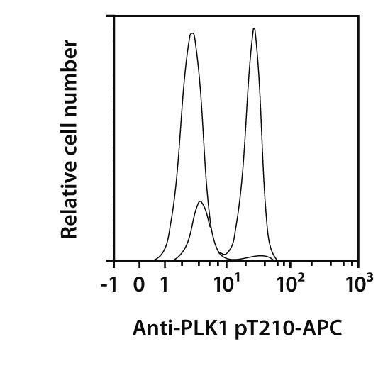 PLK1 pT210 Antibody, anti-human, REAfinity™