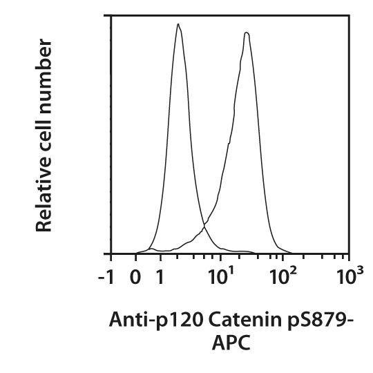 p120 Catenin pS879 Antibody, anti-human, REAfinity™