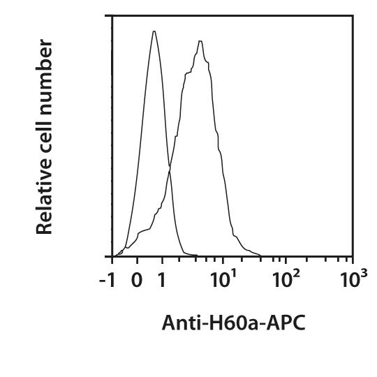 H60a Antibody, anti-mouse, REAfinity™