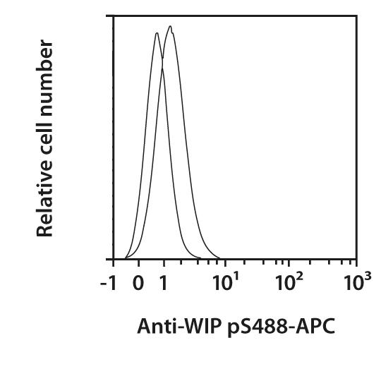 WIP pS488 Antibody, anti-human, REAfinity™
