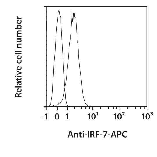 IRF-7 Antibody, anti-human, REAfinity™