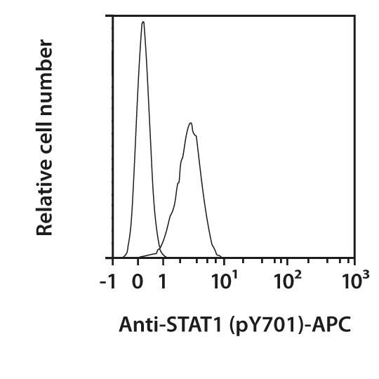 STAT1 pY701 Antibody, anti-human/mouse, REAfinity™