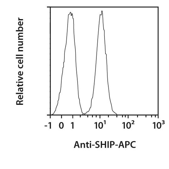 SHIP-1 Antibody, anti-human/mouse, REAfinity™
