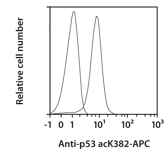 p53 acK382 Antibody, anti-human, REAfinity™