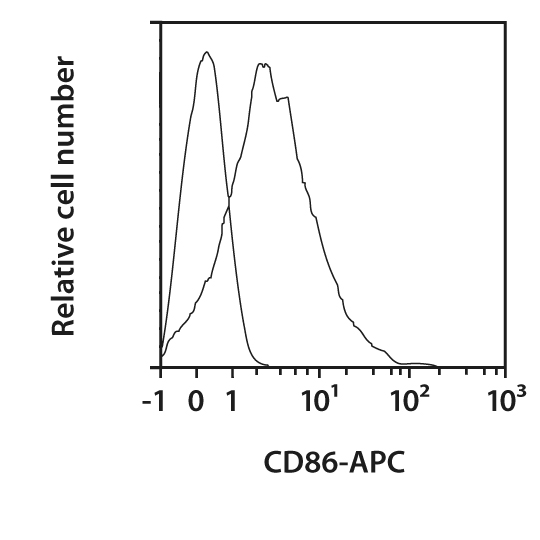 CD86 Antibody, anti-rat
