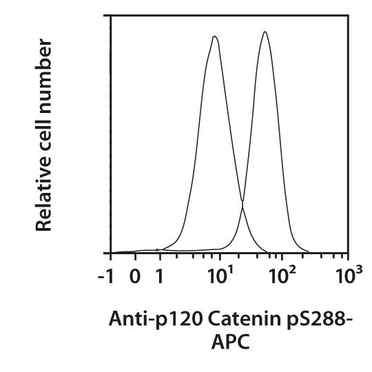 p120 Catenin pS288 Antibody, anti-human, REAfinity™