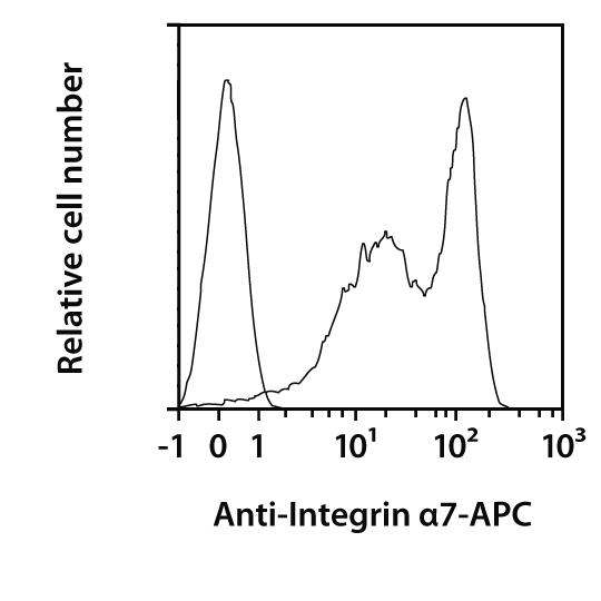Integrin α7 Antibody, anti-mouse