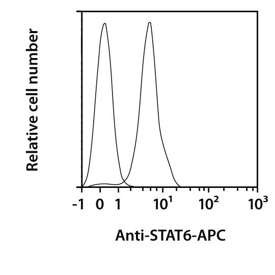 STAT6 Antibody, anti-human/mouse/rat, REAfinity™