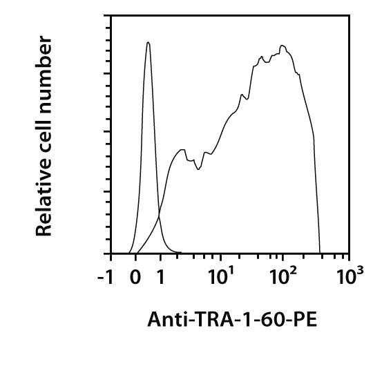 TRA-1-60 Antibody, anti-human, REAfinity™