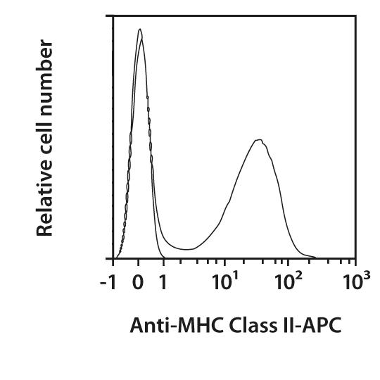 MHC Class II Antibody, anti-mouse