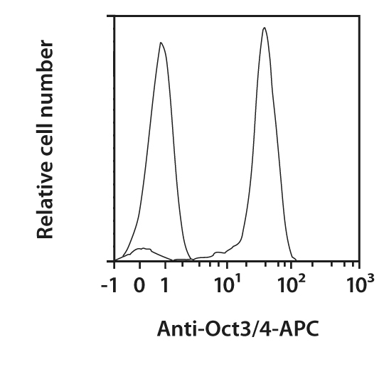 Oct3/4 Antibody, anti-human/mouse, REAfinity™