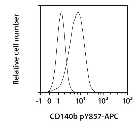 CD140b pY857 Antibody, anti-mouse, REAfinity™