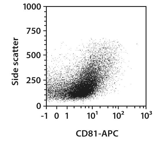 CD81 Antibody, anti-mouse/rat