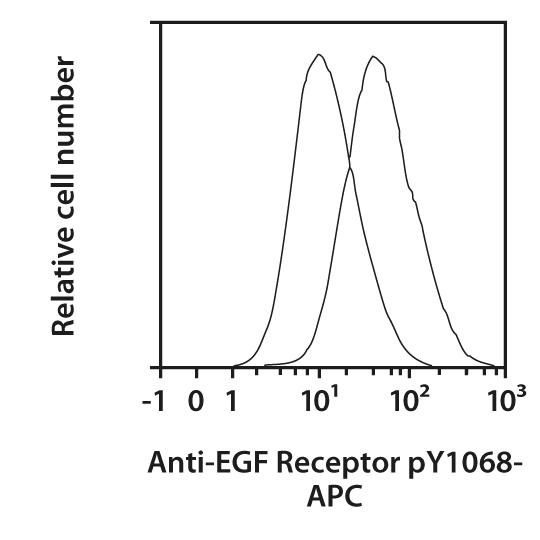 EGF Receptor pY1068 Antibody, anti-human, REAfinity™