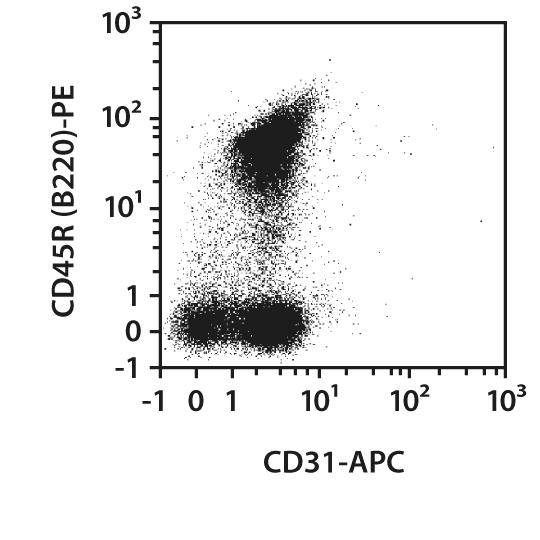 CD31 Antibody, anti-mouse