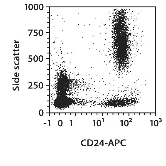 CD24 Antibody, anti-human
