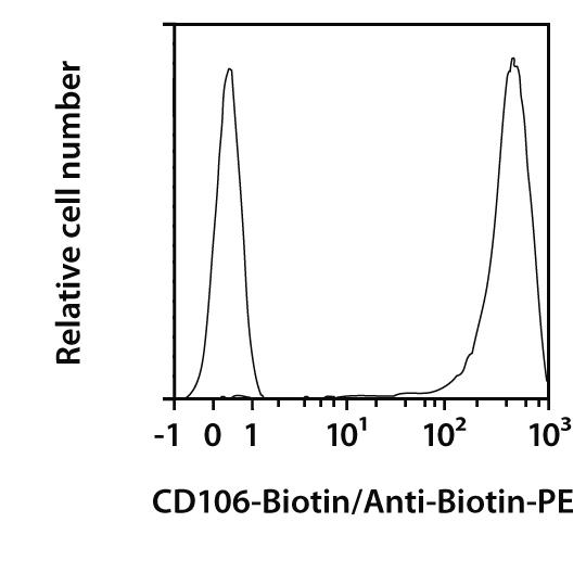 CD106 (VCAM-1) Antibody, anti-rat