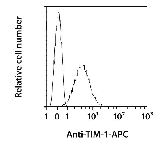 TIM-1 Antibody, anti-mouse