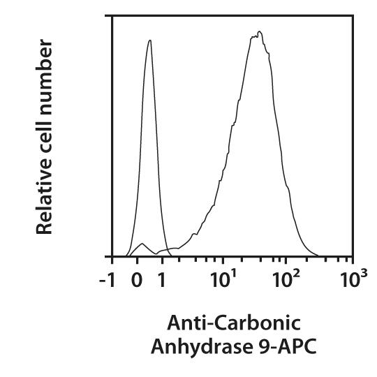 Carbonic Anhydrase 9 Antibody, anti-human, REAfinity™