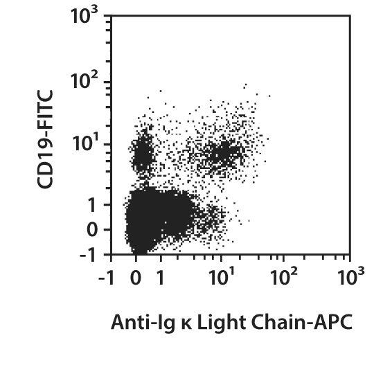 Ig κ Light Chain Antibody, anti-human