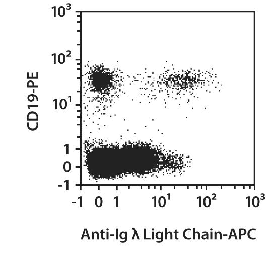 Ig λ Light Chain Antibody, anti-human