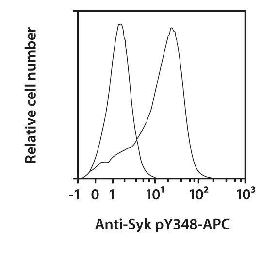 Syk pY348 Antibody, anti-human, REAfinity™