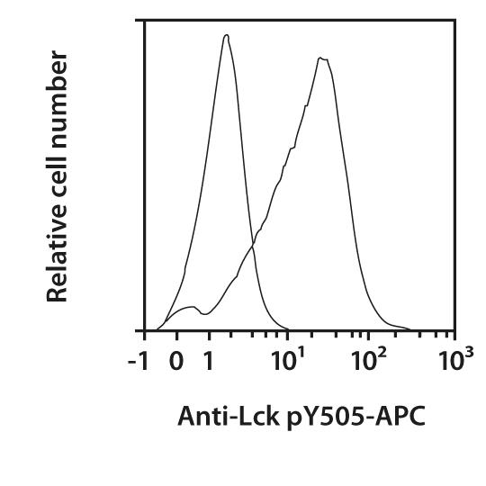 Lck pY505 Antibody, anti-human, REAfinity™