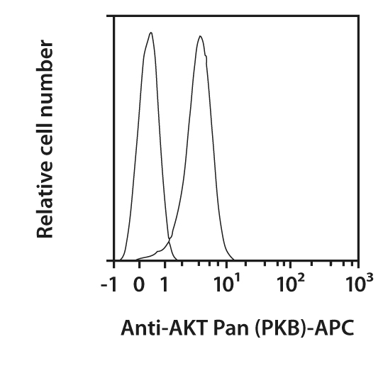 AKT Pan (PKB) Antibody, anti-human/mouse/rat, REAfinity™