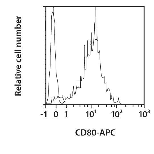 CD80 Antibody, anti-human