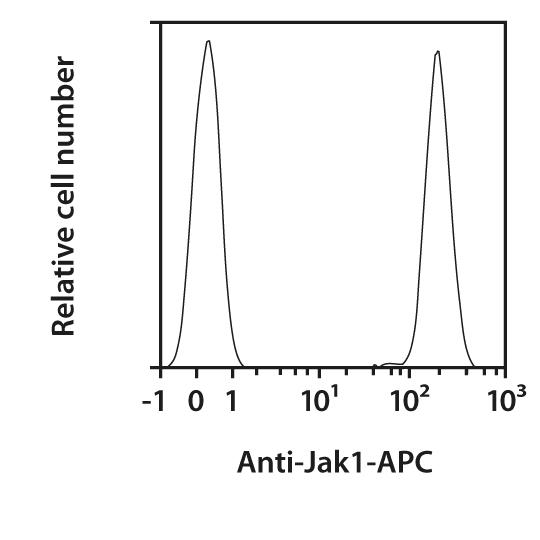 Jak1 Antibody, anti-human/mouse/rat, REAfinity™