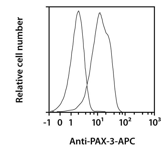 PAX-3 Antibody, anti-human/mouse, REAfinity™