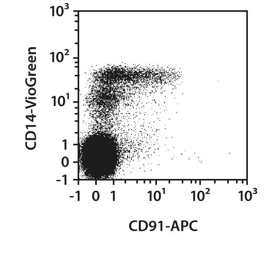CD91 Antibody, anti-human, REAfinity™