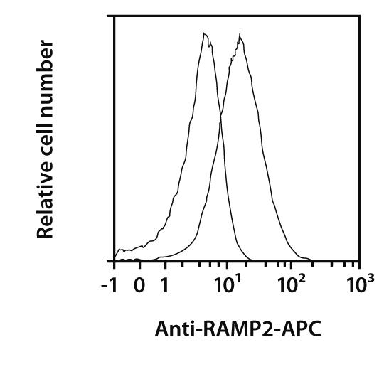 RAMP2 Antibody, anti-mouse, REAfinity™