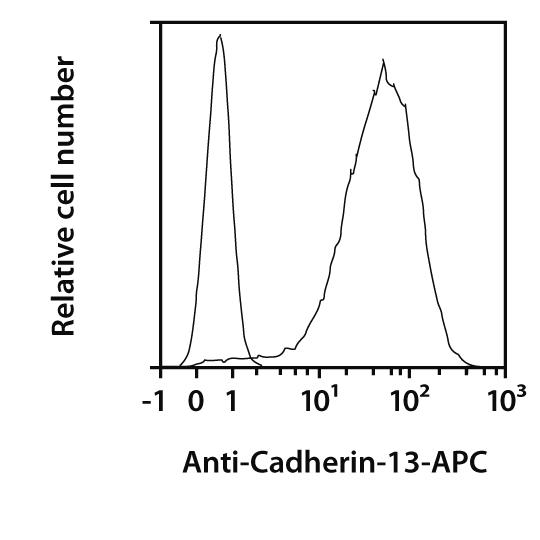 Cadherin-13 Antibody, anti-human, REAfinity™