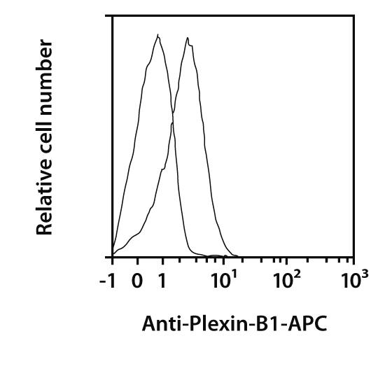 Plexin-B1 Antibody, anti-human, REAfinity™