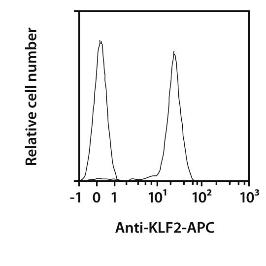 KLF2 Antibody, anti-human, REAfinity™
