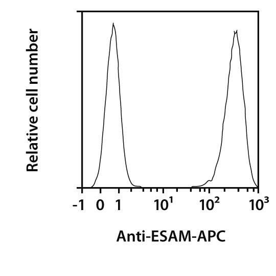 ESAM Antibody, anti-mouse, REAfinity™