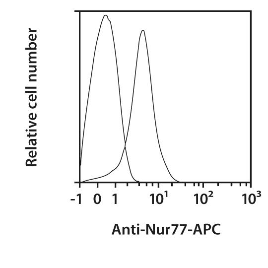 Nur77 Antibody, anti-mouse, REAfinity™