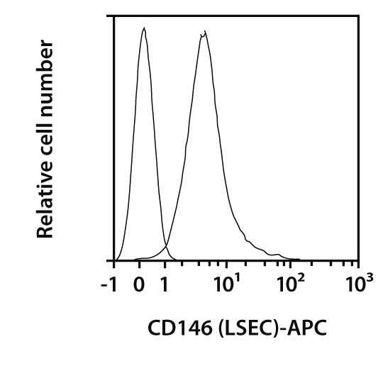 CD146 (LSEC) Antibody, anti-rat, REAfinity™