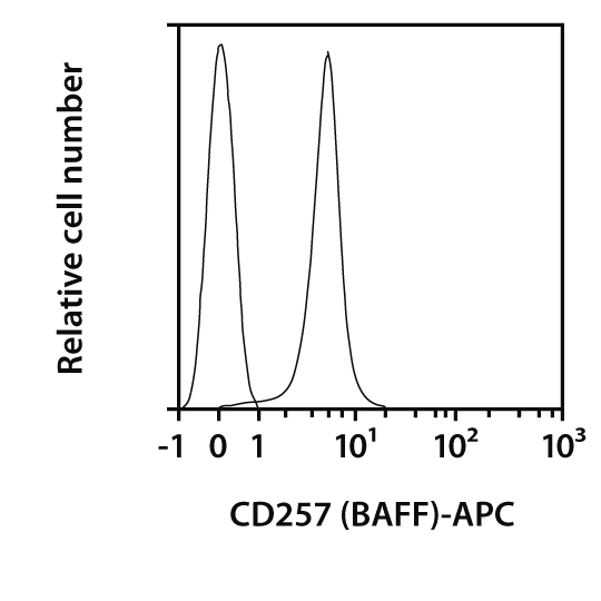 CD257 (BAFF) Antibody, anti-mouse, REAfinity™
